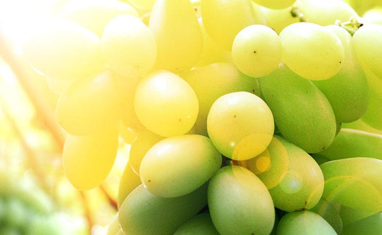 Uvas contra el sol