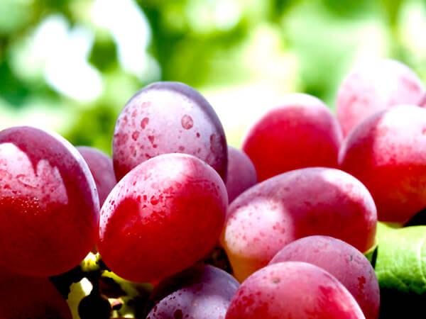 Uva roja sin semillas Crimson