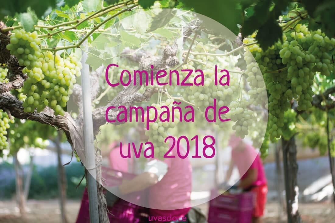 Campaña de la uva 2018