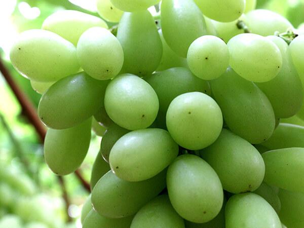 Uva blanca sin semillas Sugar Crisp