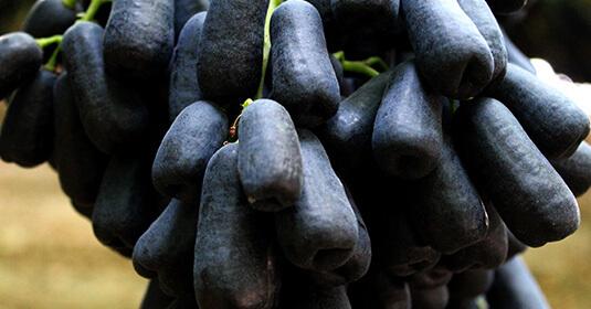 Uva negra sin semillas