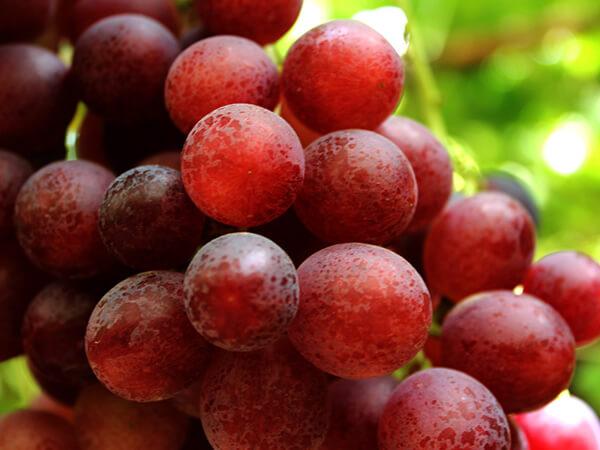 Uva roja sin semillas Sweet Celebration