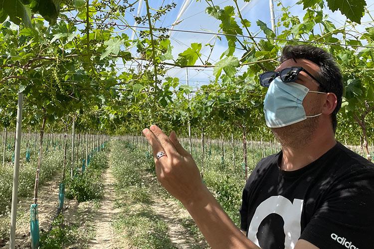 Tratamiento en la floración de la uva