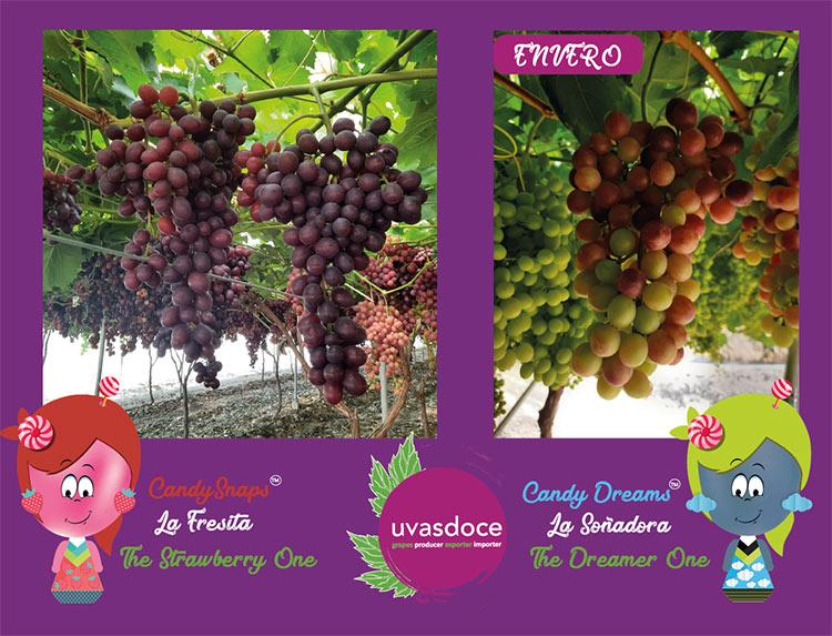 Ejemplo de envero de las uvas candies