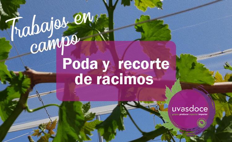 Poda y recorte de racimos de uva