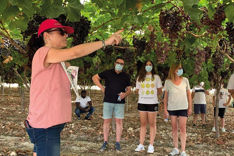 Visitas con explicación del proceso de cultivo y recolección de uva