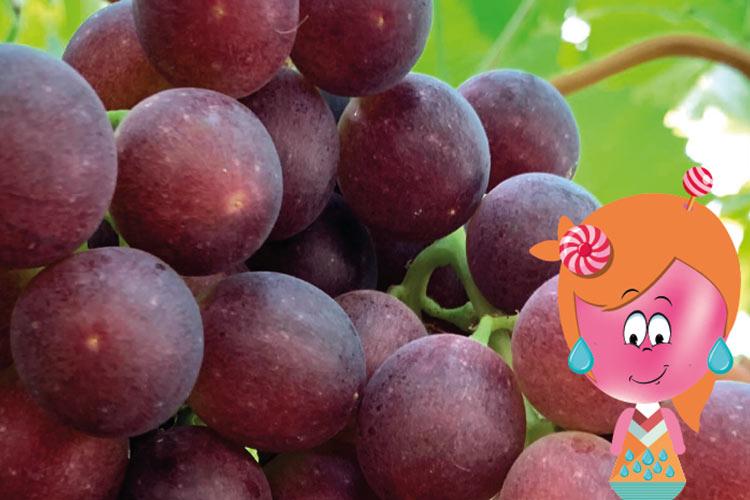 Candy Drops uva sabor moscatel