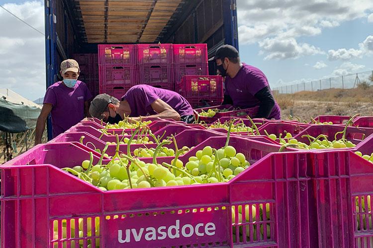 Cargando uva recolectada