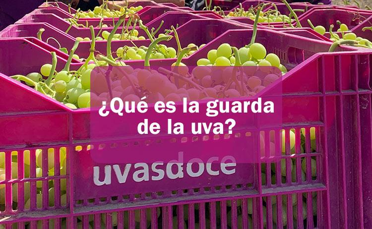 Qué es la guarda de la uva