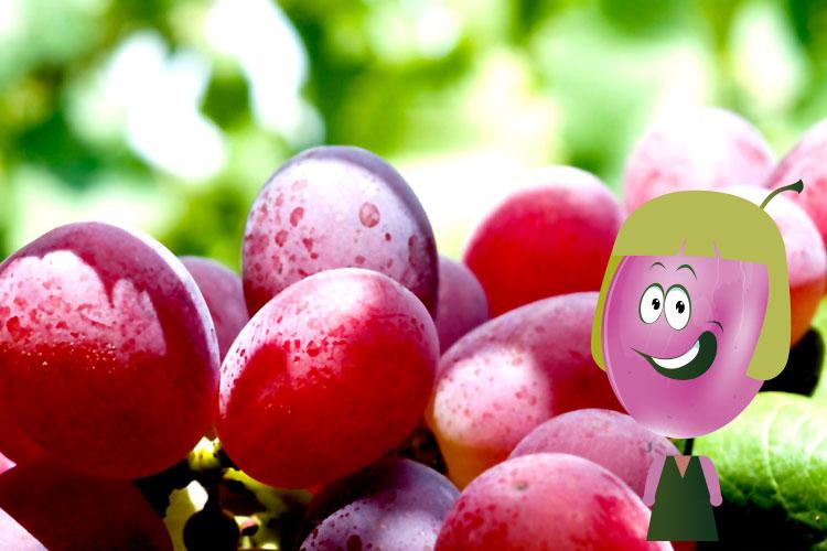 Crimson uva roja  sin semillas