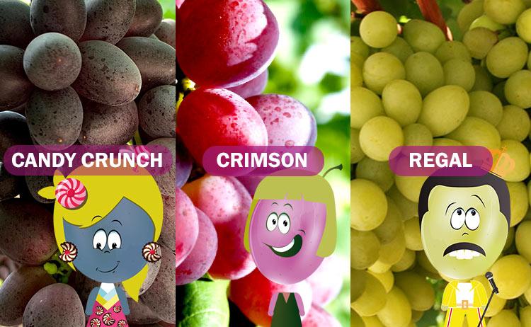 Variedades de uva tardías: Candy Crunch, Crimson y Regal